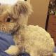 Фотогеничный кролик Уолли стал настоящей звездой Интернета