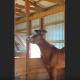 Когда женщина заметила на голове лошади это, она тут же взялась за телефон!