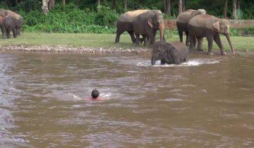 Маленькая слониха увидела, что мужчина тонет