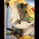 Хорьки приняли бездомного котенка в семью