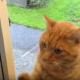 Настоящий звонок для кота