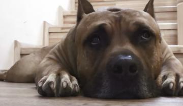Этот пес уморительно требует у хозяина что-нибудь вкусненькое! А как он любит пельмешки!