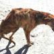 Отдыхая в Греции, женщина нашла пса с перебитой спиной…