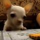 Дерзкая кража печенюшки со стола