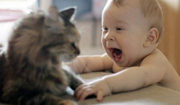 Малыш учится ходить. Посмотрите, что делает кот!