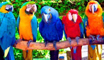 Говорящие попугаи: лучшая подборка смешных моментов!