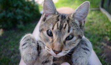 Бездомные котята родились без век, но добрые люди спасли их зрение