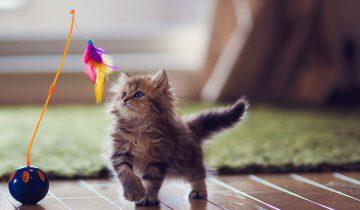 10 лайфхаков для котов!