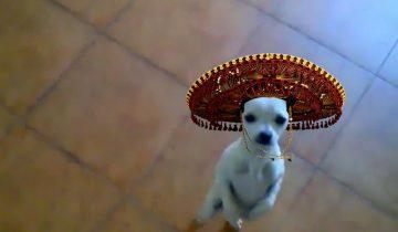 Посмотрите, что этот пес вытворяет на танцполе…