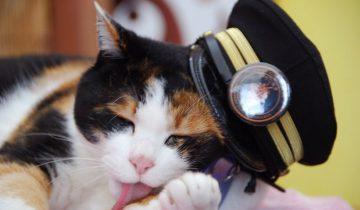 Кот – начальник железнодорожной станции