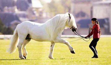 Эти лошади великолепны!