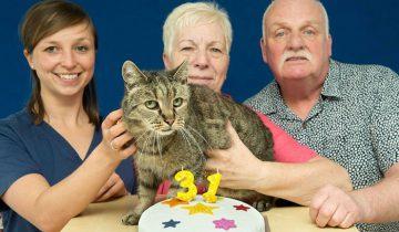 Самый старый кот отпраздновал свой 31 день рождение