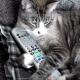 О самых вредных кошках в мире!