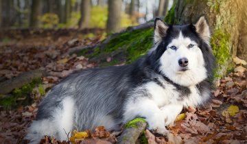 60 000 000 рублей! Столько нашла для хозяев собака, копаясь под деревом!