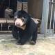 3-месячного медвежонка спасли от браконьеров!