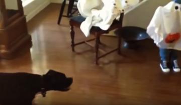 Смешные собаки против хэллоуина