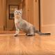 Этот котенок родился инвалидом. Посмотрите, что он делает!