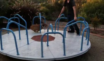 Корги обожает кататься на карусели