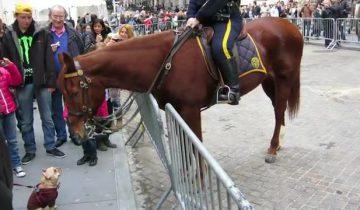 Щенок заигрывает с полицейской лошадью. Что она сделала в ответ?