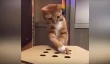 Игра, которая точно понравится кошкам