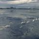 Лебединое озеро в Чернобыле