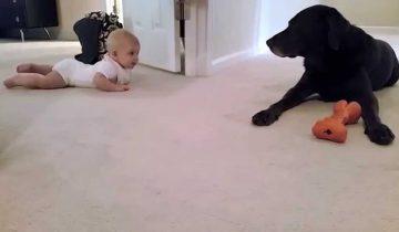 Знакомство малыша и собаки!