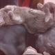Кошки, которые настолько обнаглели, что используют собак вместо подушек!