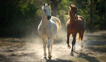 Кто бы мог подумать, что у лошадей такие отношения!
