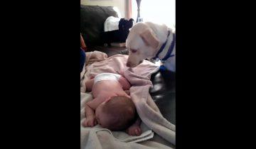Малыш спал. То, что сделал этот пес, стало для меня неожиданностью!