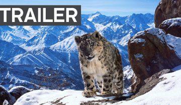 Потрясающий трейлер самого дорогого фильма о дикой природе…