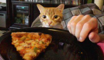 Кот кушает из тарелки хозяина