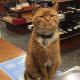Этот кот 9 лет работает в магазине без отпуска и выходных