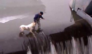 Рискованное спасение собаки