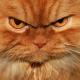 Как гневаются кошки?