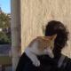 Как кошки встречают хозяев после разлуки