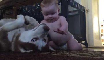 Пес старался быть суровым. Но, когда появился малыш, собака повела себя неожиданно!
