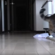 Самый смешной кот в мире!