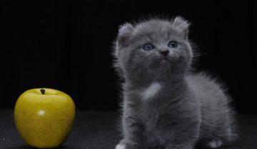 Обзор самых маленьких пород кошек!