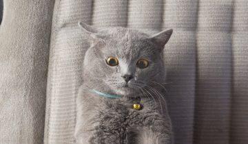 Популярные анимированые ролики о котах