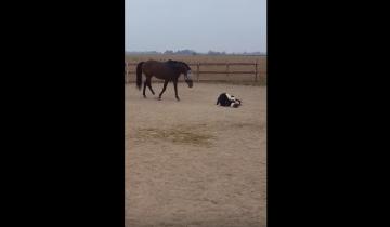 Лошадь увидела мягкую игрушку