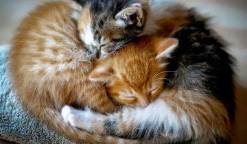 Кот спит как убитый