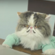 Кошки на деловом совещании