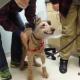 Врачи спасли собаке зрение!