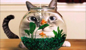 Как коты реагируют на аквариум