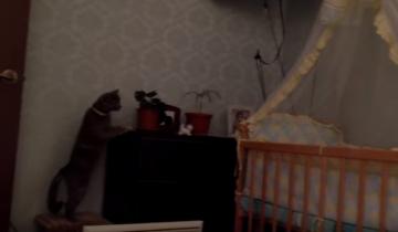Смешная реакция кошки на ребенка
