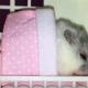 Как нужно укладывать спать хомячка