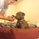 Неожиданная реакция собаки на бездомного котенка!