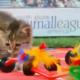 Олимпийские кошки