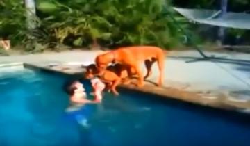 Собака волнуется за своего хозяина!