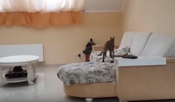 Домашний каракал и сервал играют дома!